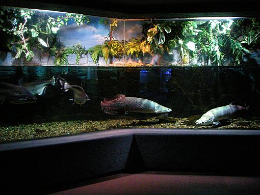 水族館5古代魚3.jpg