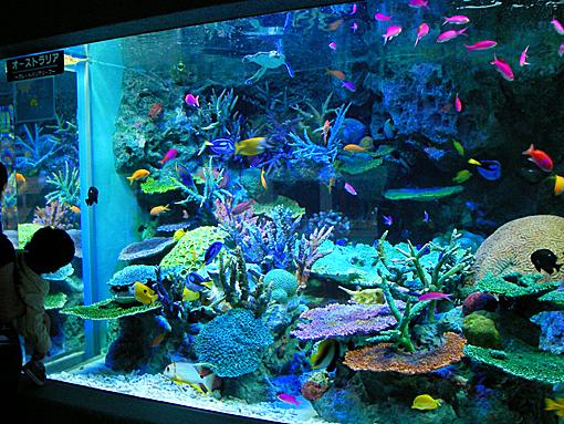 水族館73.jpg